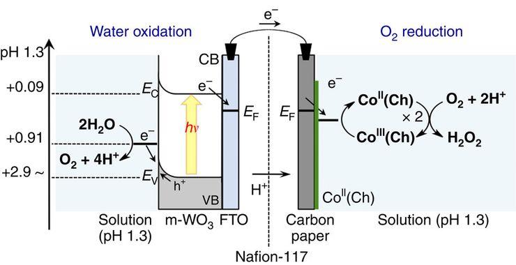 Получение пероксида водорода из воды под действием солнечного света